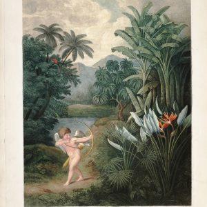 Картина Роберта Джона Торнтона Купидон и Королева