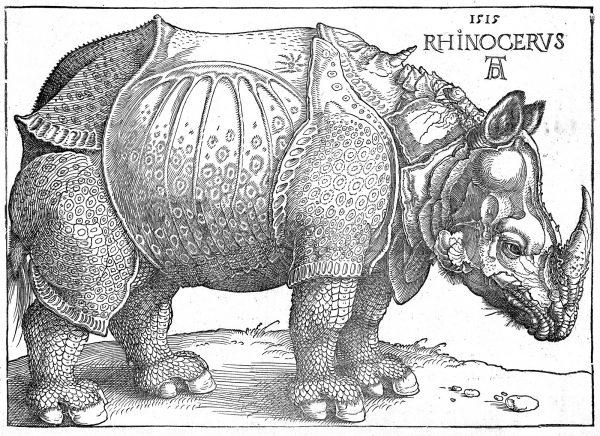 Картина Дюрера Носорог