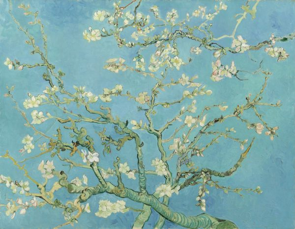 Vincent van Gogh Almond blossom 70 90