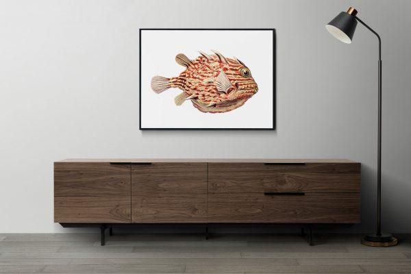 Ernst Haeckel-Boxfish-on-the-wall