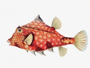 Ernst Haeckel-Boxfish-print